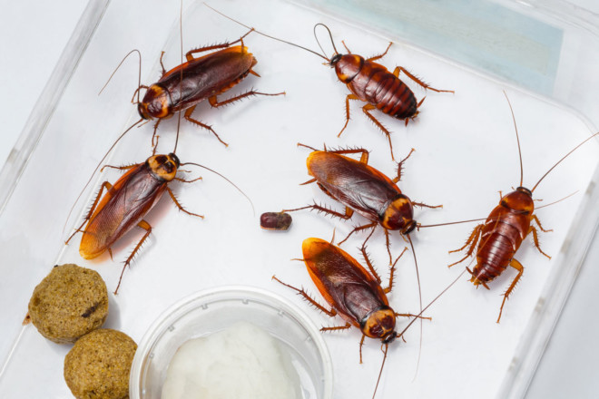 Кто ест тараканов