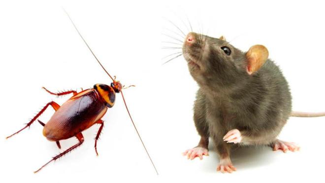 Мышь и таракан