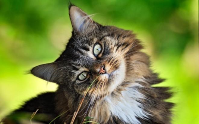 Спрей от блох для кошки