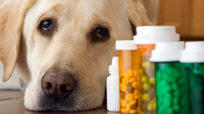 Таблетки и собака