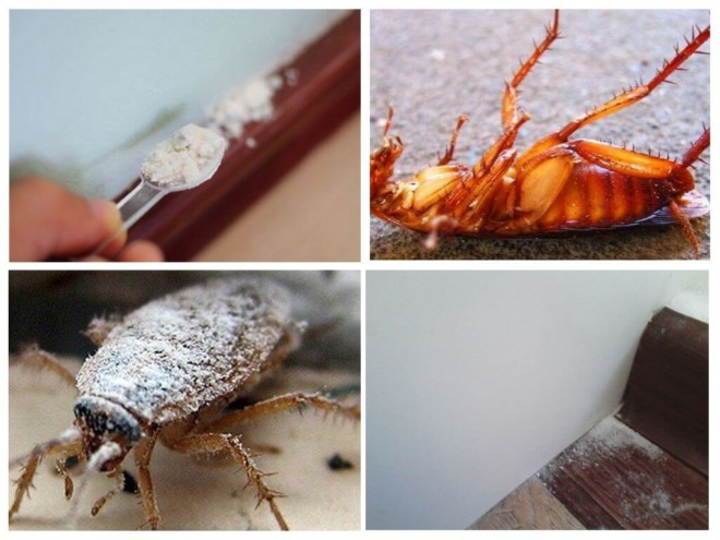 Таракан посыпан порошком