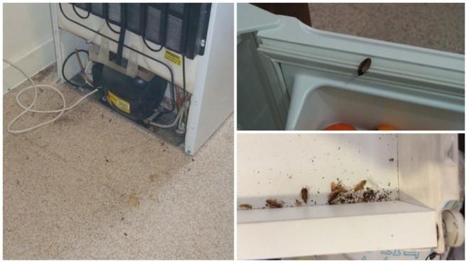Тараканы в холодильнике подборка