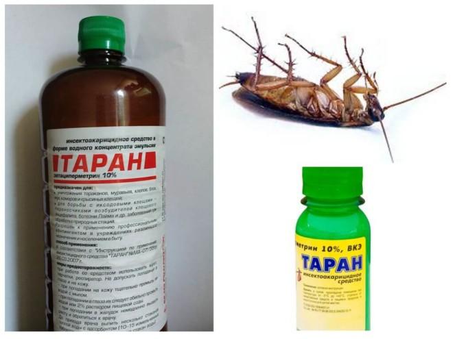 Таран и таракан