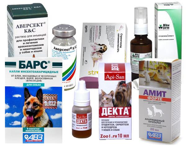 Чесоточные клещи у собаки - лечение