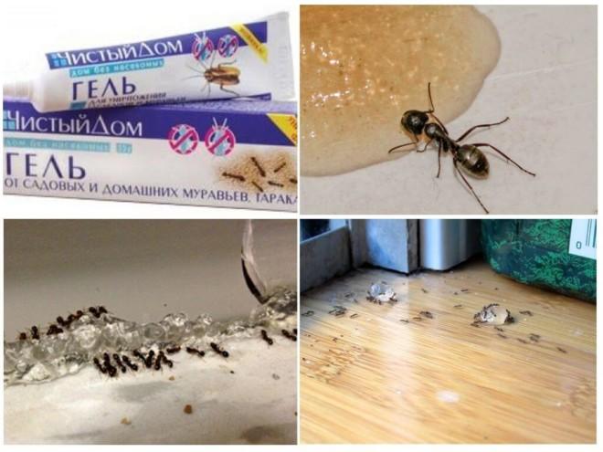 Чистый дом применение от муравьев