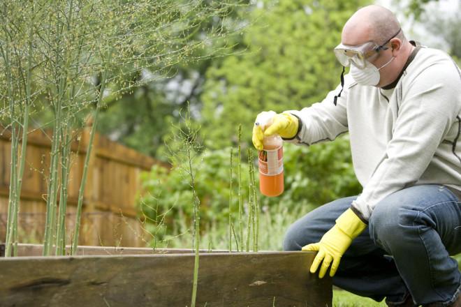 Опрыскивание от клещей в саду