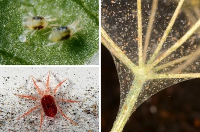 Виды клещей на растениях