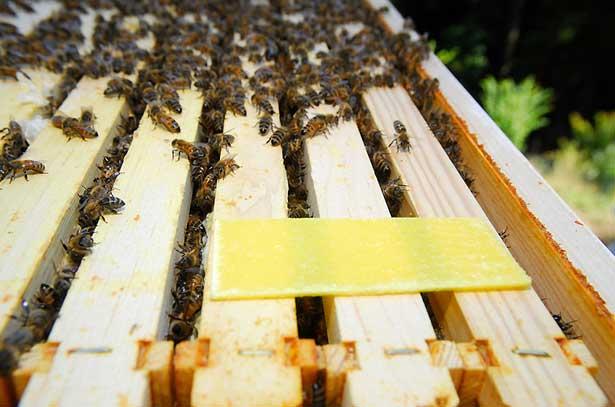 Полоски для пчел от клеща