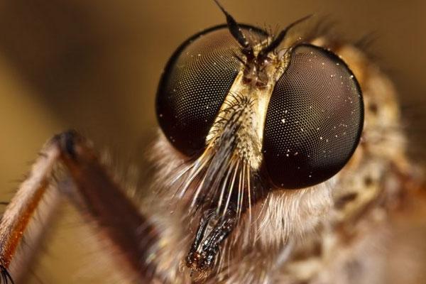Глаза комара