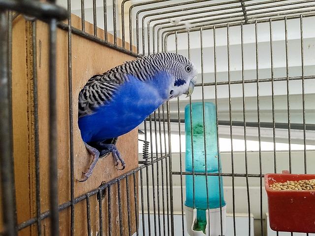 Попугай в клеткке