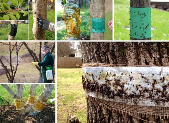 Пропитка на дерево от муравьев
