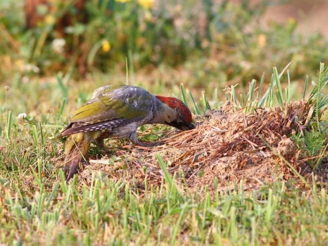 Птица на траве
