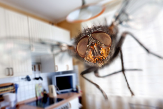 К чему снятся комары