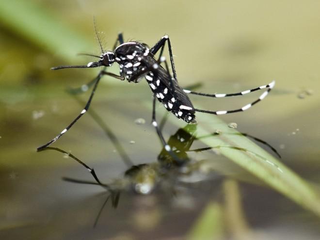 Комар на воде