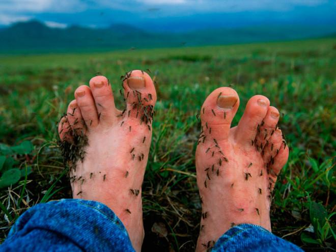 Комары на ступнях