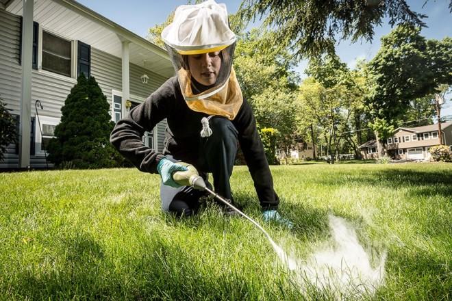 Обработка травы от комаров