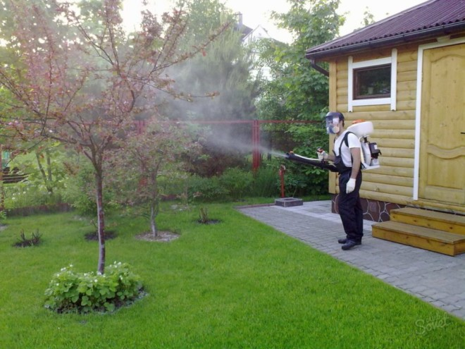 Обработка участка от комаров