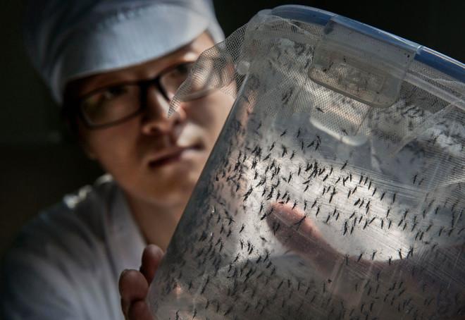Комары в сетке