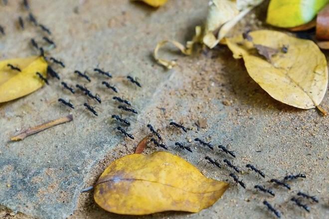Дорога муравьев