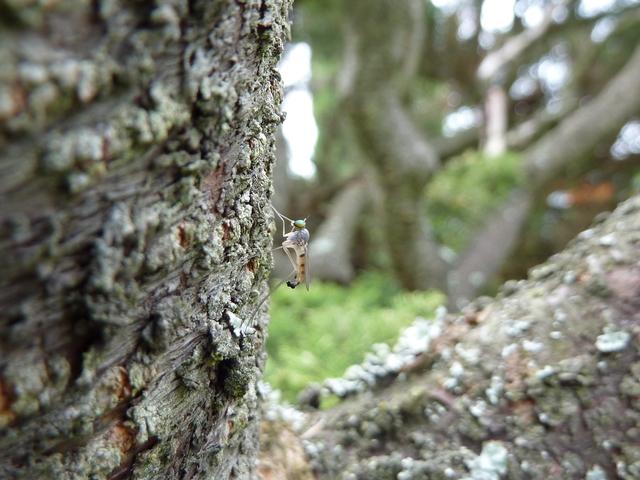 Комар на дереве