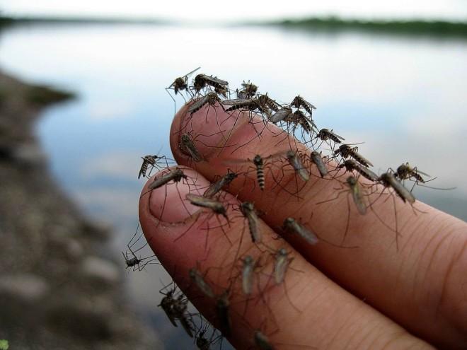Комары на пальцах