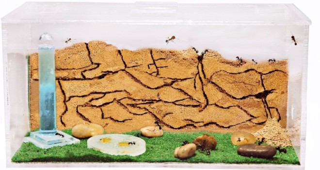 Песочная ферма для муравьев