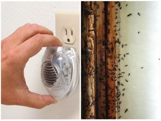 Ультразвук от муравьев