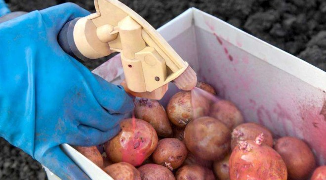 Обработка клубней картошки