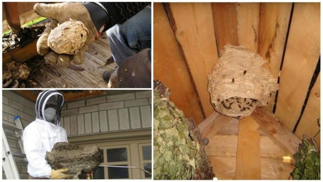 Уничтожение гнезда шершней