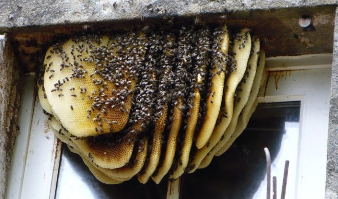 Пчелы и их гнездо