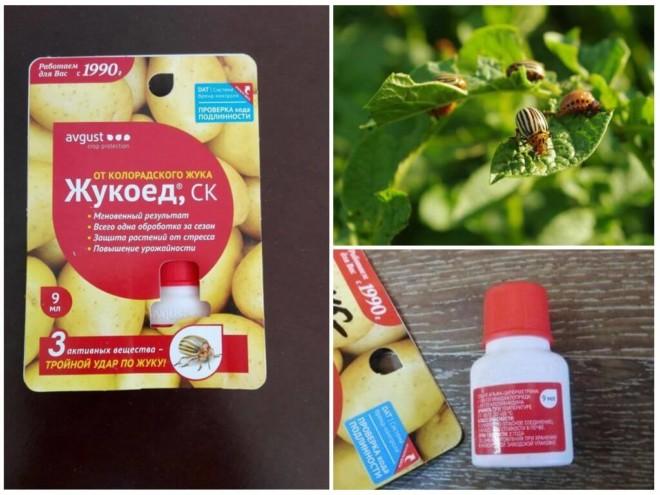 Жукоед от колорадского жука на фото