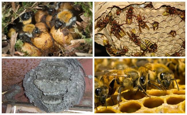 Оса, пчела, шмель, шершень гнезда