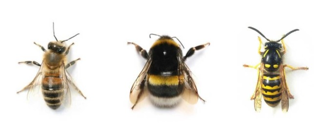 Пчела и шмель