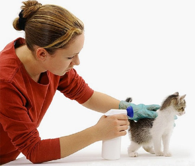 Кошку обрабатывают спреем