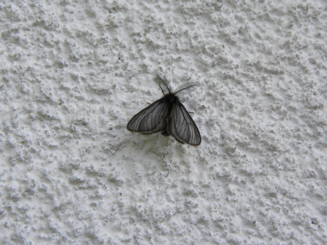 Моль на стене