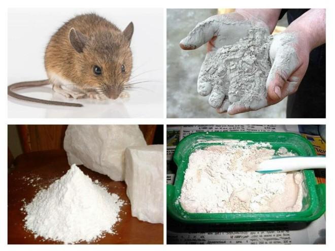 Порошок и крыса