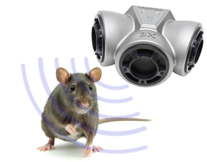 Ультразвук и крыса