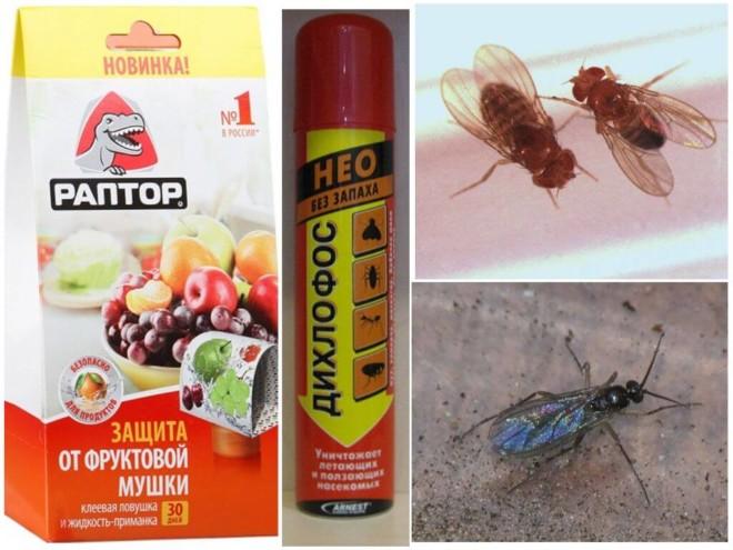 Инсектициды от мошек